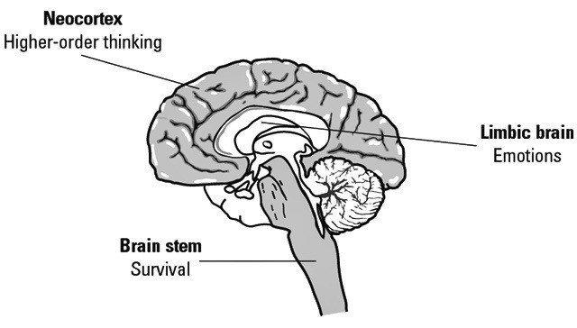 triune brain model