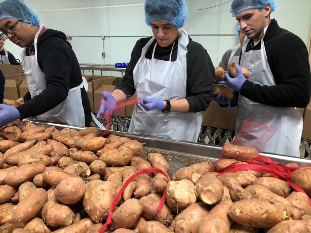 people packing sweet potatoes