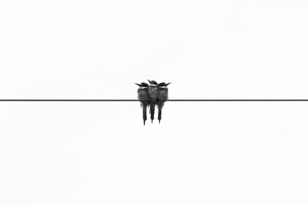 three birds on a line